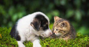 I cani riescono a capire i gatti