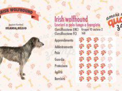Irish Wolfhound scheda razza