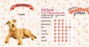 Irish Terrier scheda razza