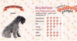 Kerry Blue Terrier scheda razza