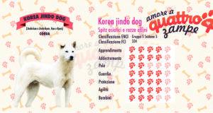 Korea Jindo Dog scheda razza