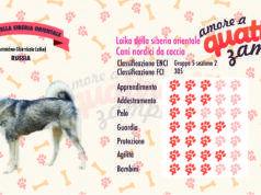 Laika della siberia orientale scheda razza