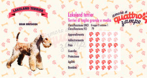 Laikeland terrier scheda razza