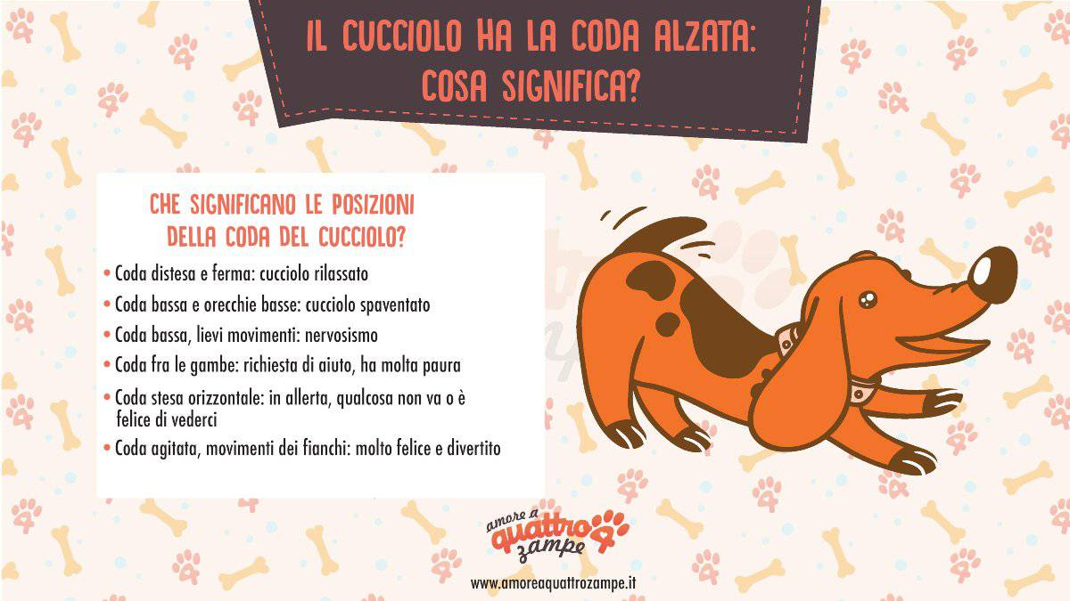 infografica coda cucciolo