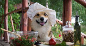 insalate estive per il cane