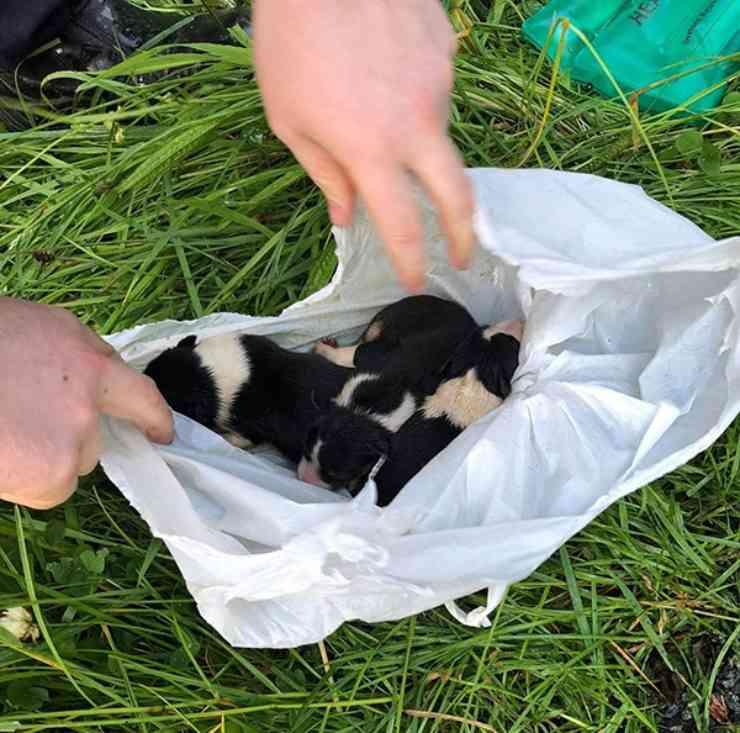 cuccioli sacchetto