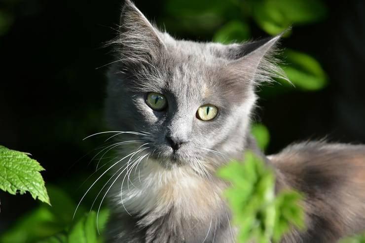 Le tipiche abitudini del gatto (Foto Pixabay)
