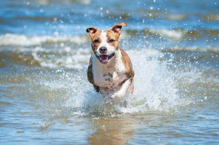 l acqua di mare fa bene al cane
