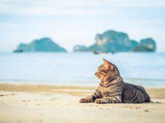 l aria di mare fa bene al gatto