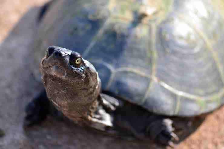le malattie delle tartarughe