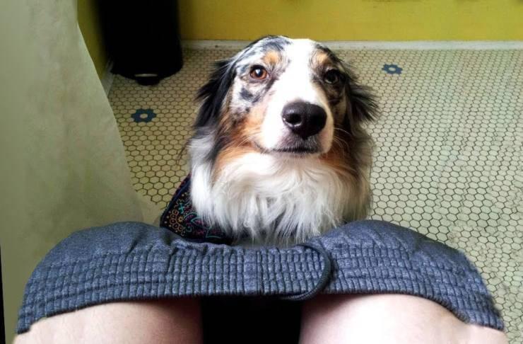 Comportamenti del cane: perché ci segue in bagno, e tanti altri significati