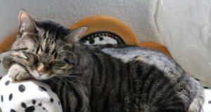 migliorare la vita del gatto sterilizzato