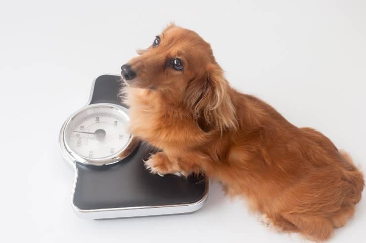 perdita di peso nel cane