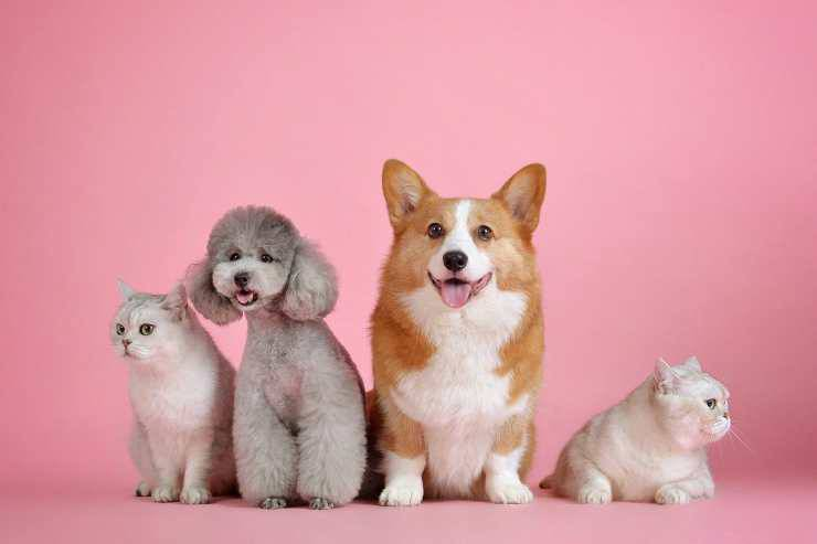 Cani e gatti insieme (Foto Pixabay)