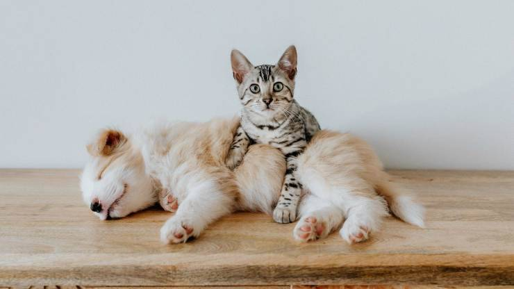 Cuccioli di cane e gatto (Foto Pixabay)
