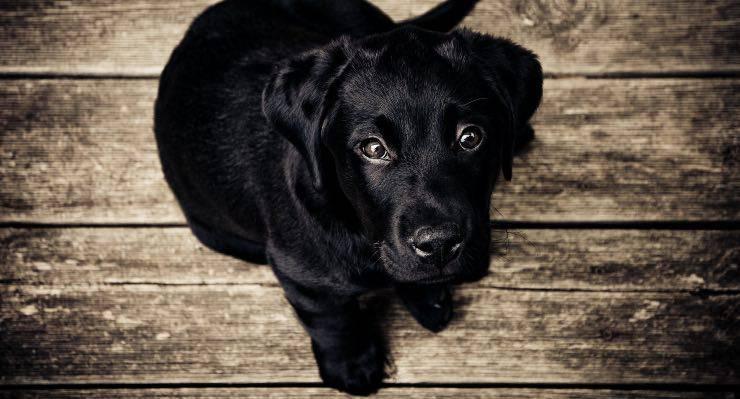 cane ansia stress lingua fuori