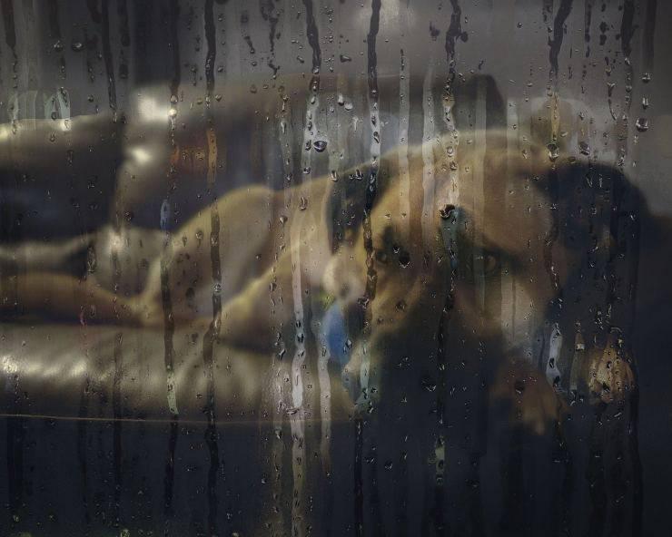 La depressione da involuzione nel cane