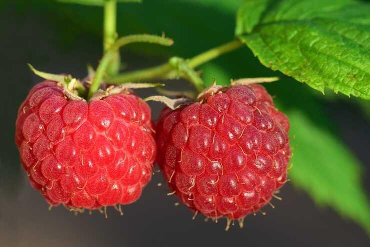Il lampone è un frutto estivo (Foto Pixabay)