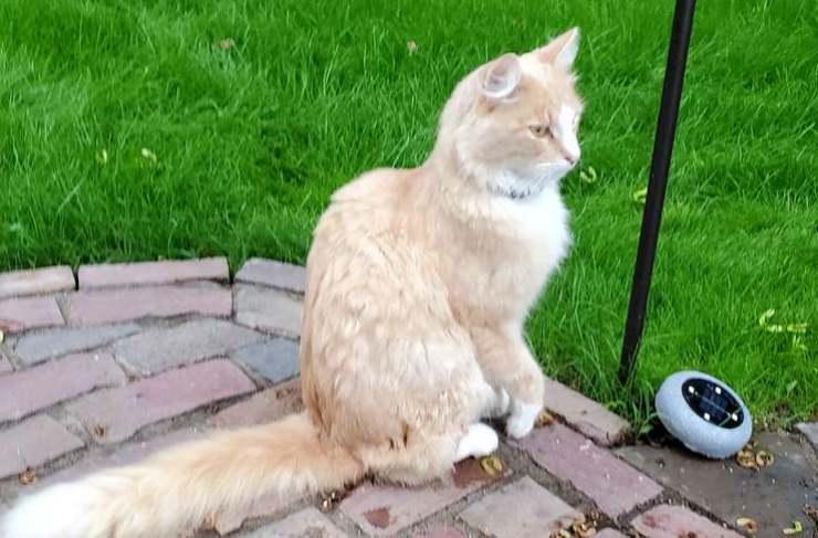 Il gatto infastidito dagli inquilini Facebook