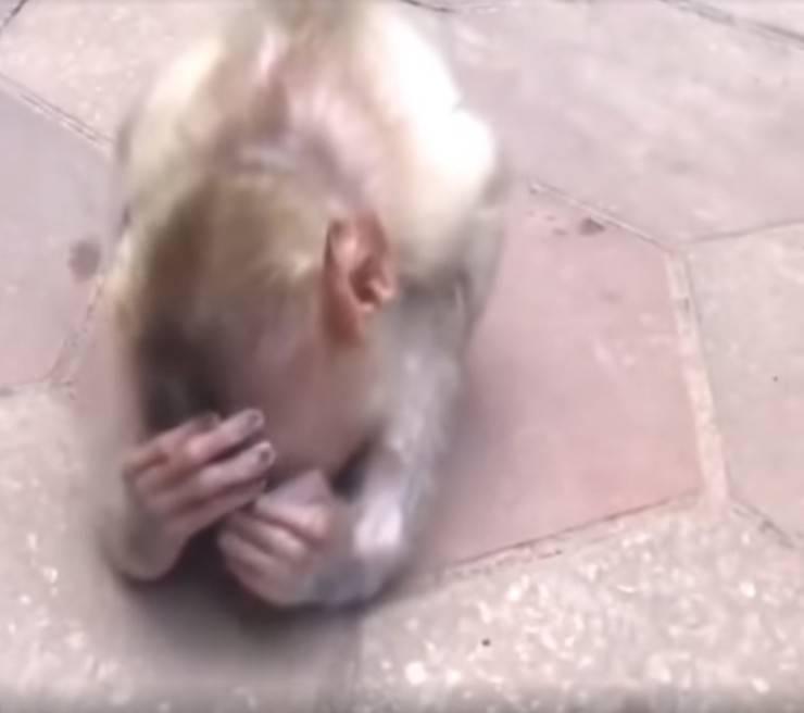 scimmia abbandonata