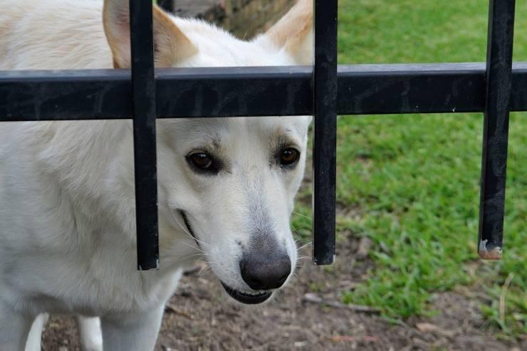 Il cane ha paura di uscire