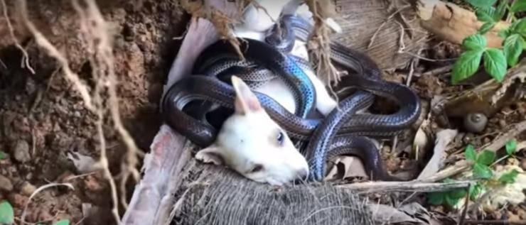 cane serpenti