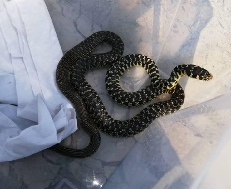 serpente casa