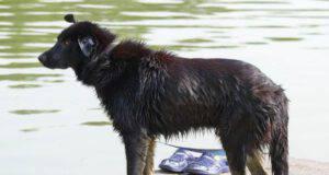 sindrome della coda fredda nel cane