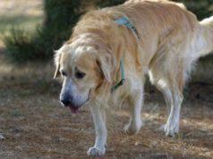 sintomi del tetano nel cane