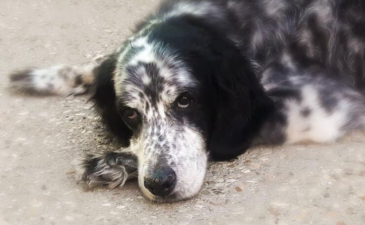 Stella cane salvato eutanasia