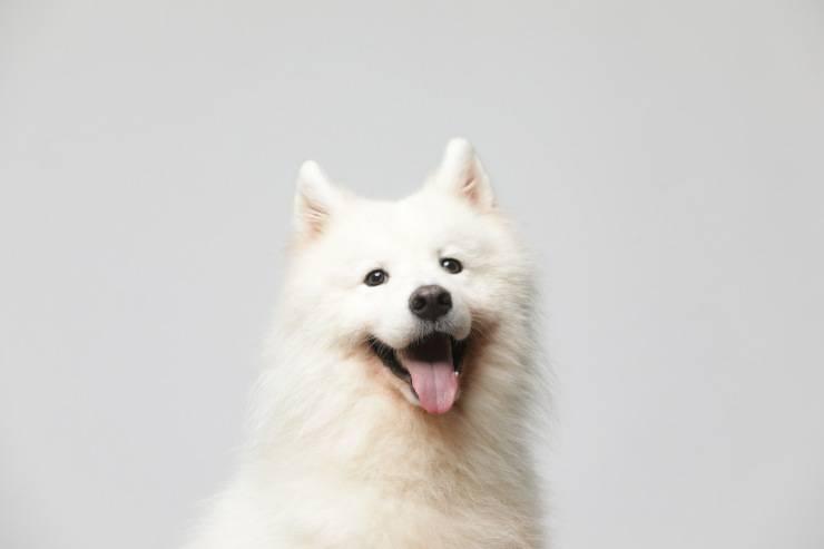 sterilizzare cane motivi salute