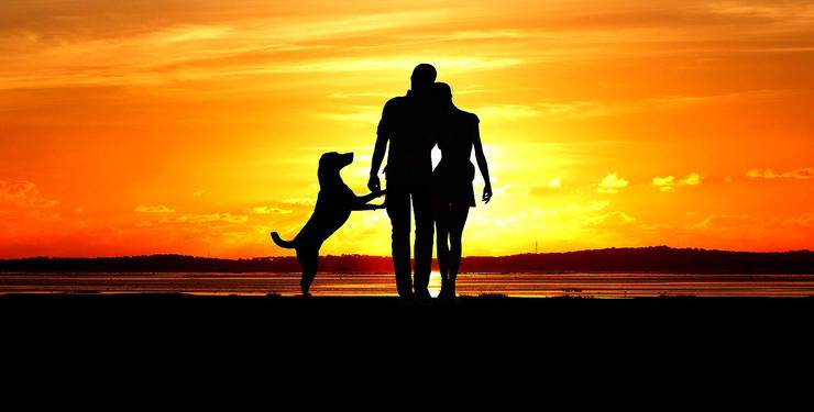 Cane e padroni al tramonto (Foto Pixabay)