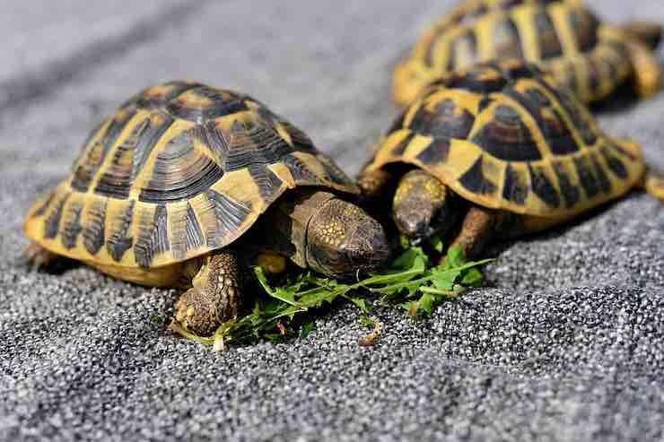 l'alimentazione della tartaruga