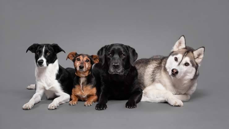 test scegli il cane che ti piace
