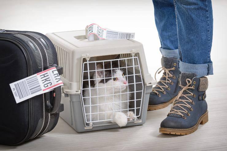 trasportino per il gatto