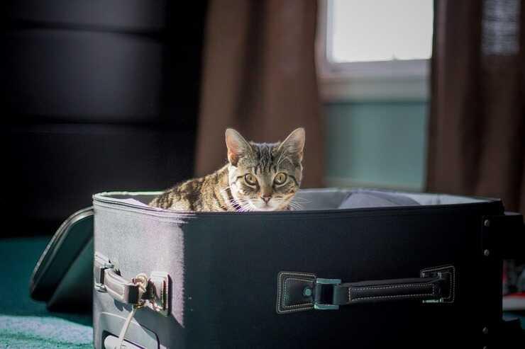 Gatto nella valigia (Foto Pixabay)