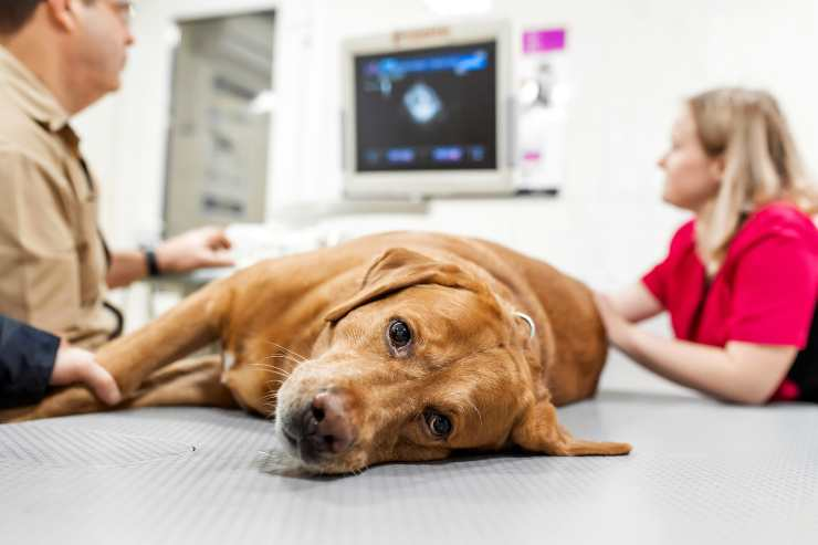 Razze di cani a rischio tumore