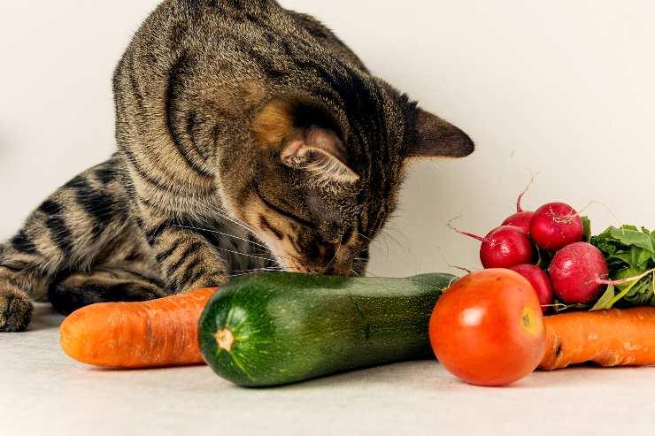 verdure micio