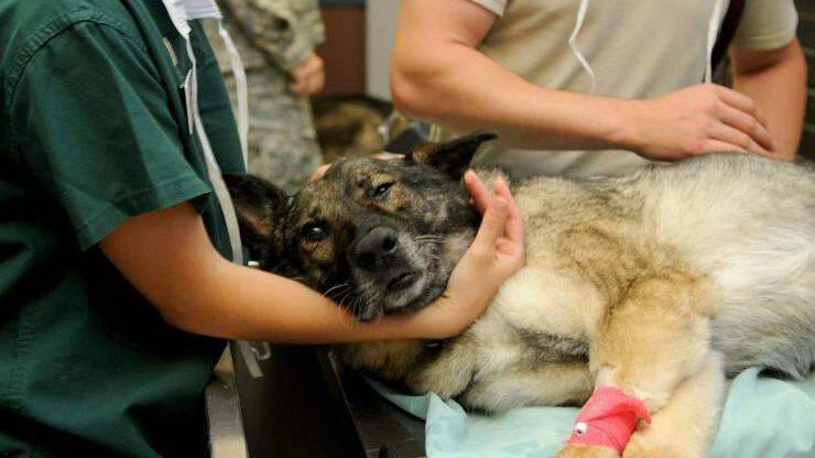Veterinario cane