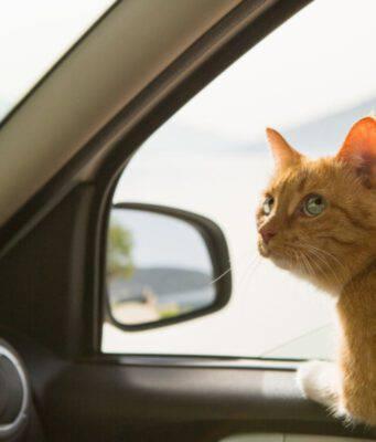 Viaggiare in auto con un animale domestico