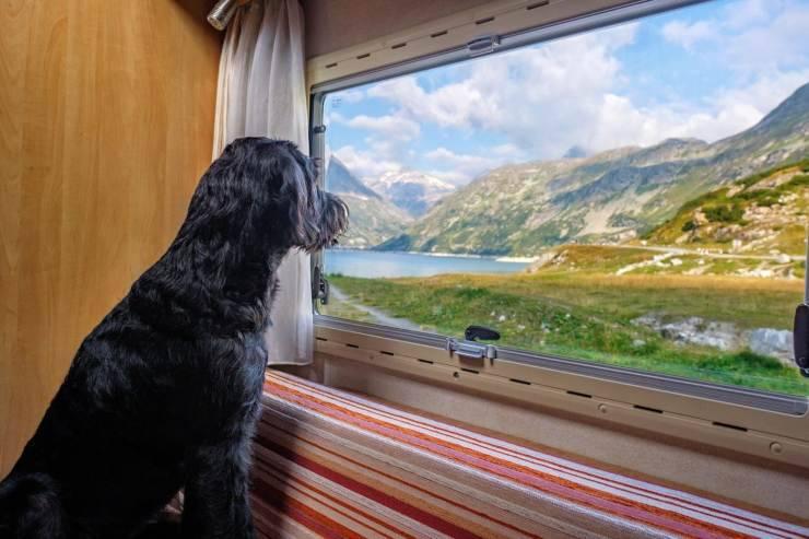 Cane si affaccia alla finestra