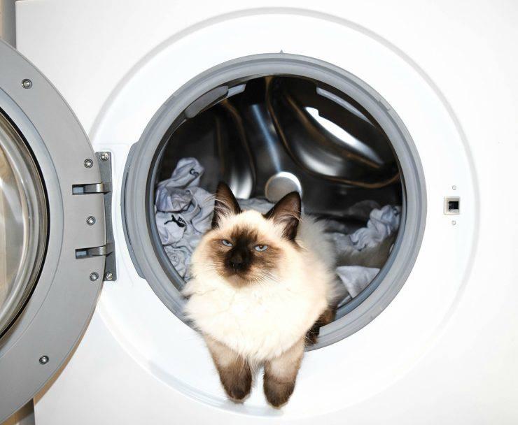 Gatto in lavatrice