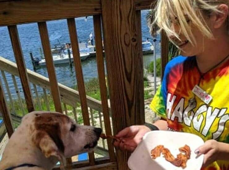Wilson che mangia un appetitoso pasto (Foto di dominio pubblico)