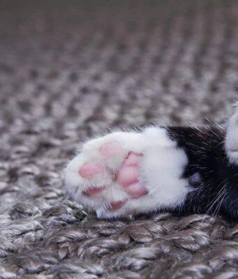 zampe fredde gatto