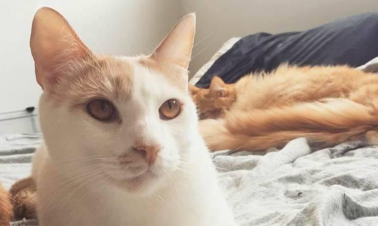 I gattini amici (Foto Instagram)