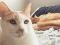 L'amicizia tra felini (Foto Instagram)