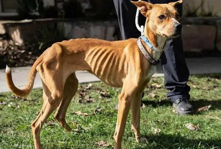 La cagnolina sofferente (Foto Facebook)