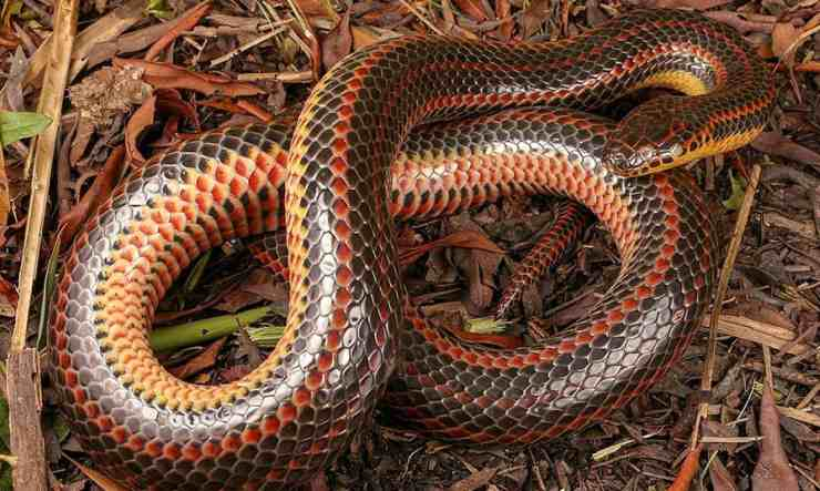 Il serpente a cerchio (Foto Facebook)