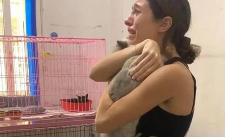 beirut volontari animals lebanon