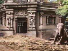 mara elefantessa liberata durante pandemia
